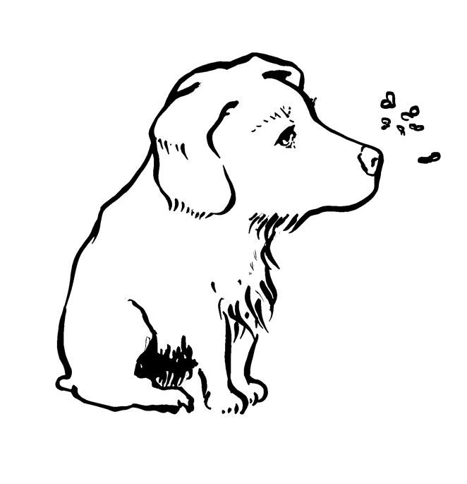 Hund-Kopie